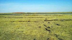 西乌珠穆沁旗草原因化工厂抽地下水,草场干裂。(乔龙提供)