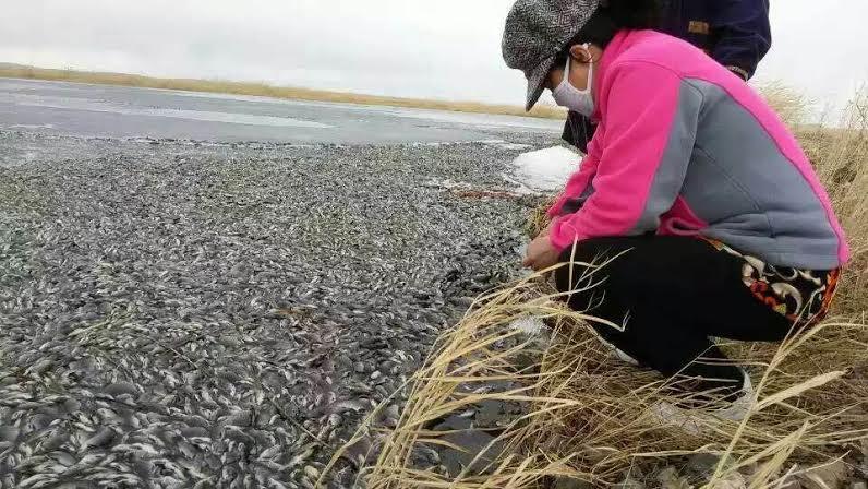 莫日格勒河被污染1